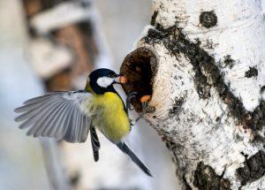 2.osobennosti povedeniya pticz 300x215 - Дмитрий Шеваров: «Гнездо света. Три птичьих истории, рассказанных вечером в канун весны»