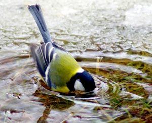 201312240032 kashamalasha com 300x244 - Дмитрий Шеваров: «Гнездо света. Три птичьих истории, рассказанных вечером в канун весны»