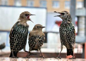 221236 300x214 - Дмитрий Шеваров: «Гнездо света. Три птичьих истории, рассказанных вечером в канун весны»