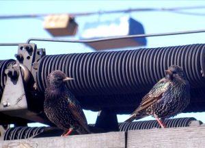 maxresdefault 300x216 - Дмитрий Шеваров: «Гнездо света. Три птичьих истории, рассказанных вечером в канун весны»