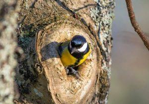 sin 022 300x211 - Дмитрий Шеваров: «Гнездо света. Три птичьих истории, рассказанных вечером в канун весны»