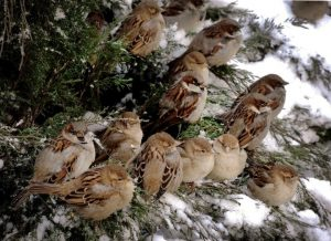 vorobi00s 300x218 - Дмитрий Шеваров: «Гнездо света. Три птичьих истории, рассказанных вечером в канун весны»
