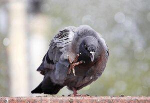 04e5bd13459280e483245df364873cb2 300x207 - Злопамятство: ржавчина души, червь ума и вшивый голубь