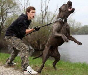 2 sobaka dovolno agressivna 300x257 - Ребёнок жестоко обращается с домашними животными. Что делать?