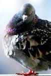 Злопамятство: ржавчина души, червь ума и вшивый голубь