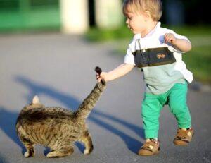kot napadaet na rebenka i kusaet forum 300x231 - Ребёнок жестоко обращается с домашними животными. Что делать?