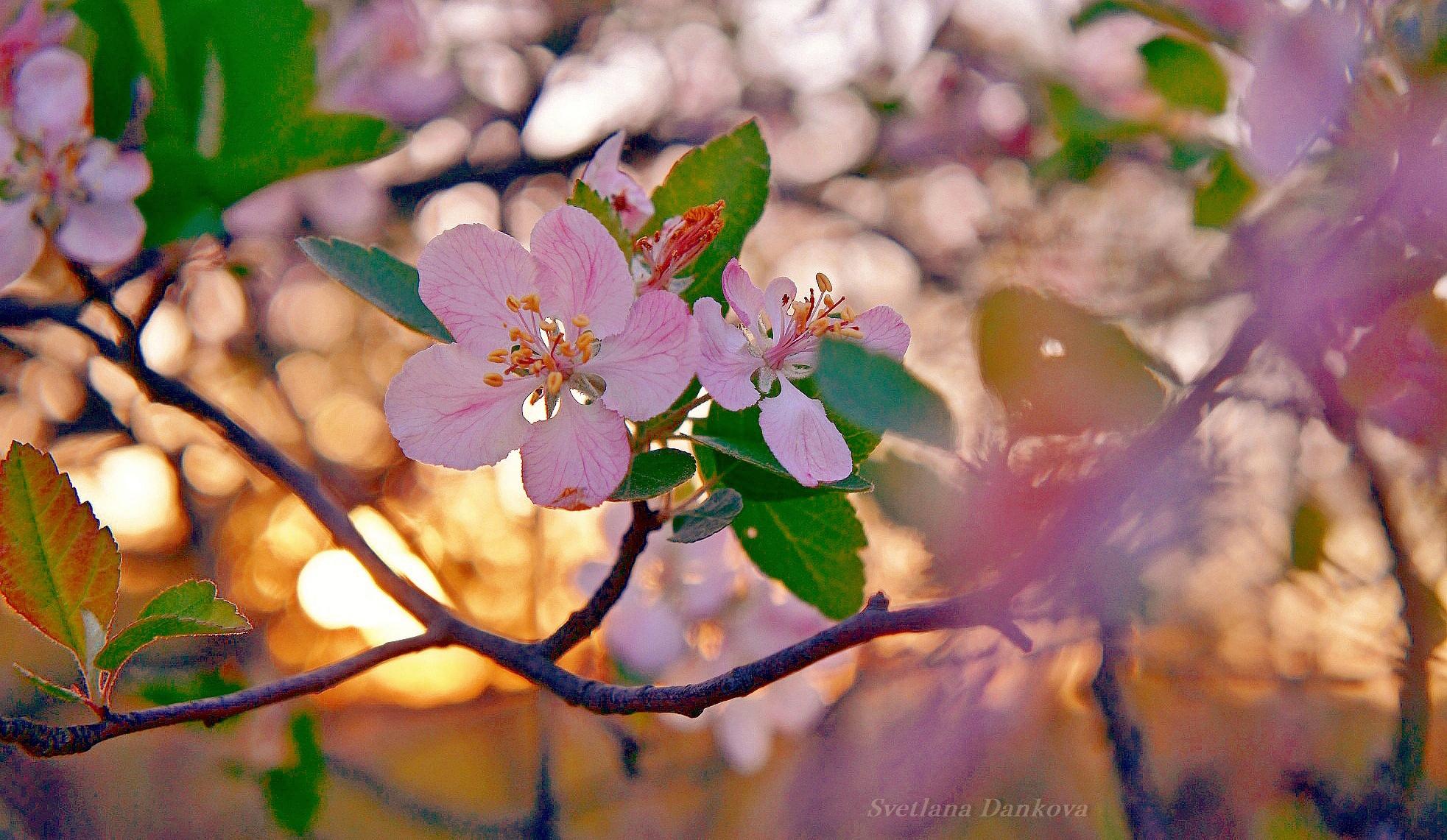 гифки красивые картинки цветение веточки неприхотливое, при