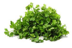 fresh parsley isolated - Жареный корень лопуха