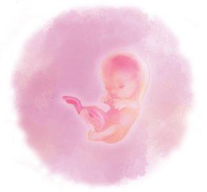 10 e1583880514554 300x277 - Десятая неделя беременности