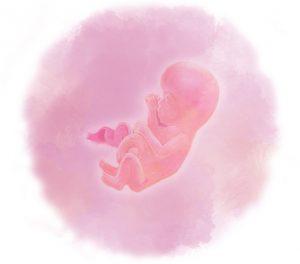 14 e1583880217230 300x264 - Четырнадцатая неделя беременности
