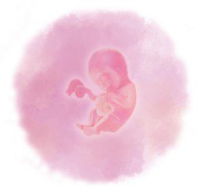 18 e1583415043998 300x274 - Восемнадцатая неделя беременности