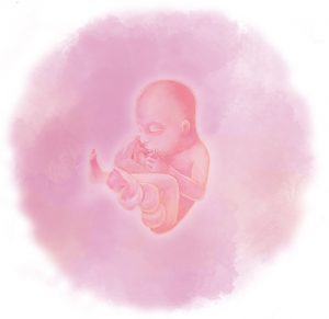 21 e1583238150609 300x291 - Двадцать первая неделя беременности