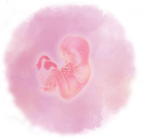 22 e1583238081578 300x285 - Двадцать вторая неделя беременности
