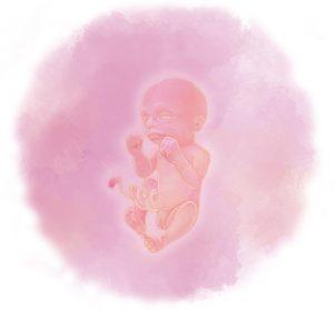 24 e1583237932926 300x280 - Двадцать четвертая неделя беременности