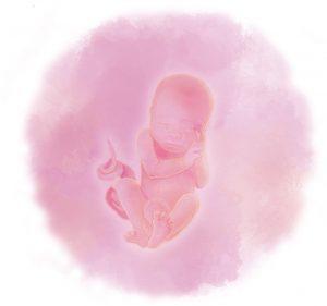 25 e1583237797123 300x281 - Двадцать пятая неделя беременности