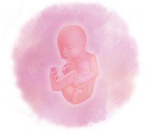 28 e1583237305429 300x263 - Двадцать восьмая неделя беременности
