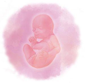 30 1 e1583237097731 300x293 - Тридцатая неделя беременности