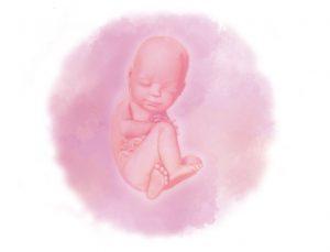 36 e1580853918346 300x229 - Тридцать шестая неделя беременности