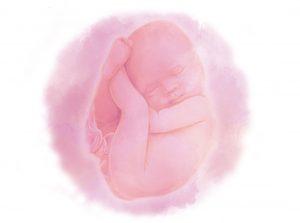 image1 e1580852925347 300x223 - Сорок вторая неделя беременности