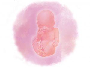 image4 e1580854506116 - Тридцать первая неделя беременности