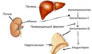 image001 300x175 - Современные средства для снижения артериального давления