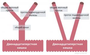 """obshhij kanal - Желчный пузырь и поджелудочная железа или теория """"общего канала"""""""
