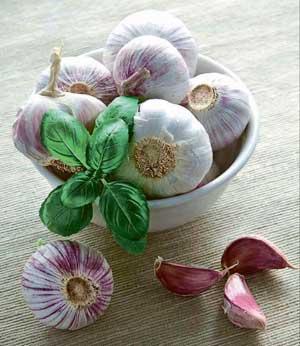Gyógynövények ronkók a prosztatitisből)