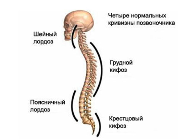Оздоровительный комплекс для профилактики сколиоза
