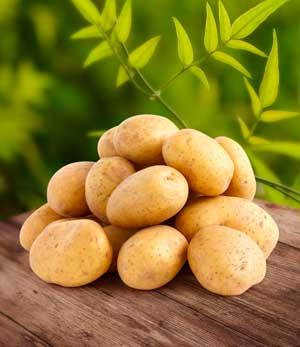 Путеводитель по разновидностям картофеля