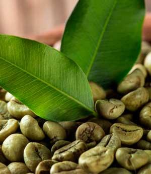 Зелёный кофе: польза ивред