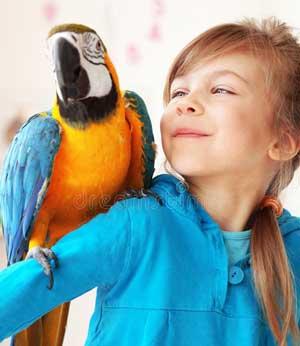 Что такое орнитоз?