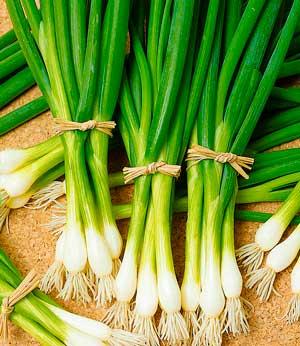 Зеленый лук для вашего здоровья. Полезные свойства