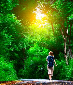 Прогулки по лесу: правила безопасности