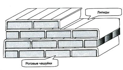 image006 - Вся правда о мыле: польза и вред