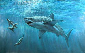 image010 1 300x188 - Опасности при купании в море. Кого нужно опасаться?