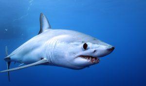 image011 300x178 - Опасности при купании в море. Кого нужно опасаться?