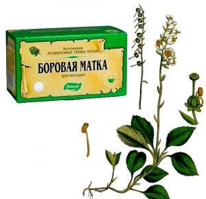 trava borovaya matka 879 580 300x290 - Боровая матка: лечебные свойства