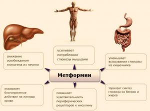 meh metphormin 300x222 - Применение метформина: от диабета, старости и не только...