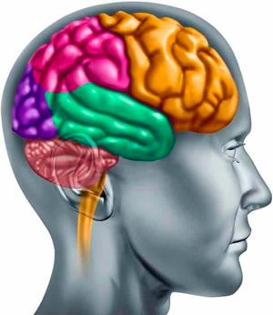 Мозг использует 5% своих возможностей — правда илимиф?
