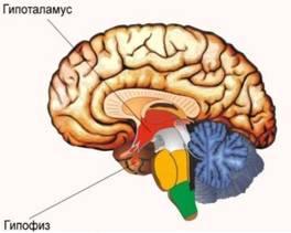 image006 - Эндокринные гипертензии: причиной повышенного давления могут быть гормоны