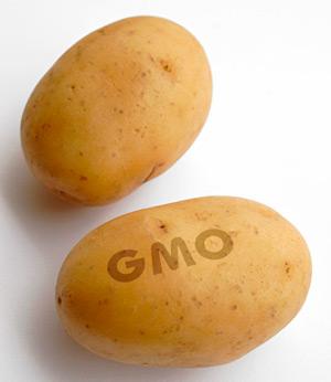 Генетик опасается воздействия созданного им ГМО-картофеля на здоровье людей