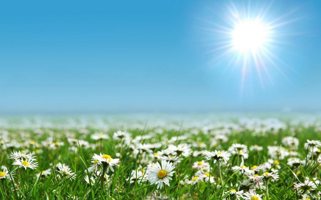 Картинки полянка с цветами 6